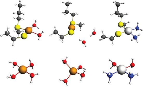 Models of the binding of Cu and Pt to the predicted Met56 and Cys104 site in MEK1/2.
