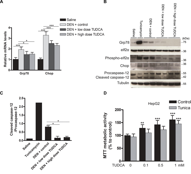 Effect of TUDCA on the hepatic UPR pattern in the DEN-induced mouse model of HCC.