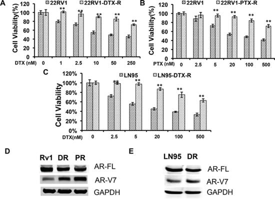 Upregulation of AR-V7 in taxane-resistant prostate cancer cells.