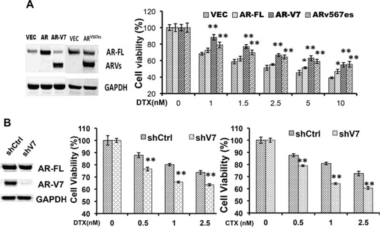 Expression of constitutively active AR-Vs negatively impact the cytotoxicities of taxanes.