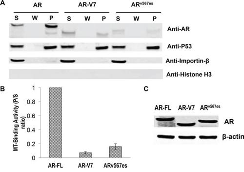 Poor microtubule-binding activities of the AR-Vs.