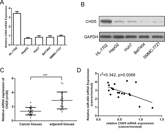 CHD5 was downregulated in HCC tissue and cell lines and was inversely expressed with miR-454.