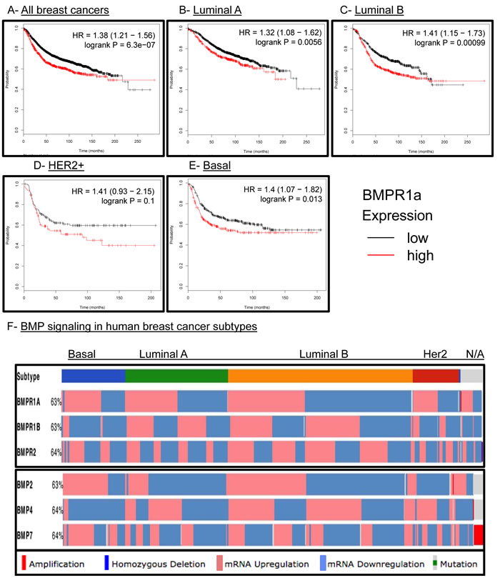 BMPR1a correlates as a tumor promoter in human breast cancer and is not unique to any molecular subtype.