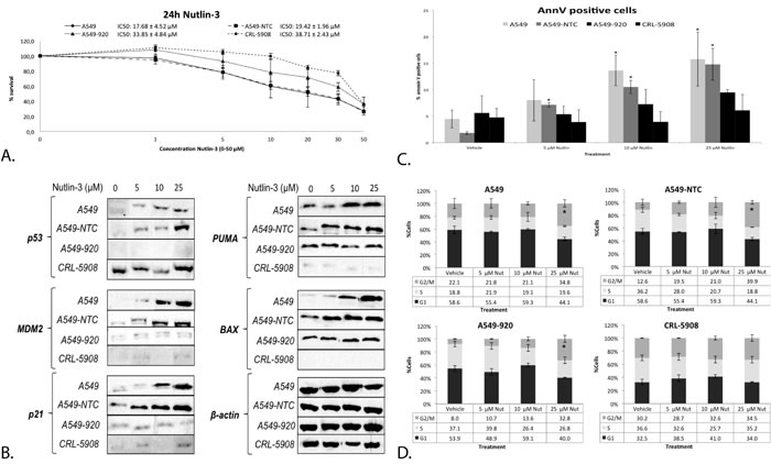 The response to Nutlin-3 monotherapy was strongest in the presence of wild type p53