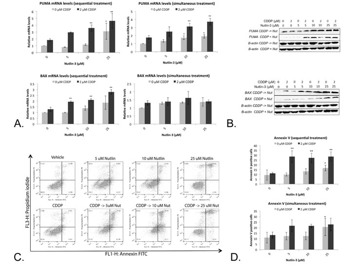 Nutlin-3 enhanced the apoptotic effect of CDDP in the p53 wild type cell line A549.