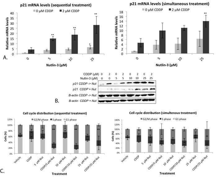 Nutlin-3 induced a strong G2/M phase arrest in combination with CDDP in the p53 wild type cell line A549