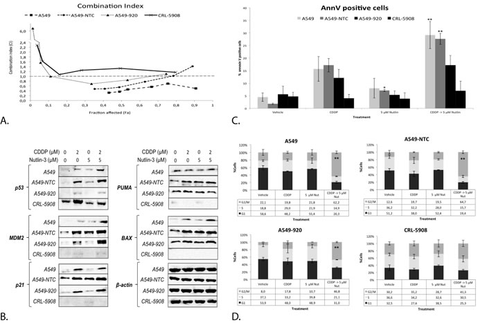 The synergistic cytotoxic effect of the sequential combination therapy was correlated with the p53 status of the cell.