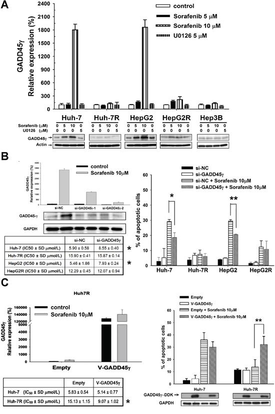 In vitro studies on the effects of GADD45γ expression on sorafenib efficacy.