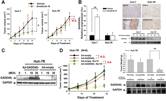 In vivo studies on the effects of GADD45γ induction on sorafenib efficacy.