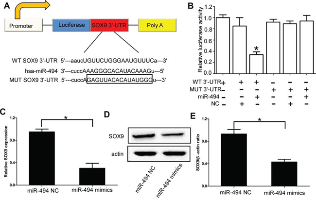 SOX9 is the direct target of miR-494 in chondrosarcoma cells.