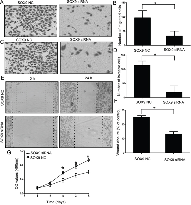 Effect of SOX9 on cell migration and invasion of chondrosarcoma cells.