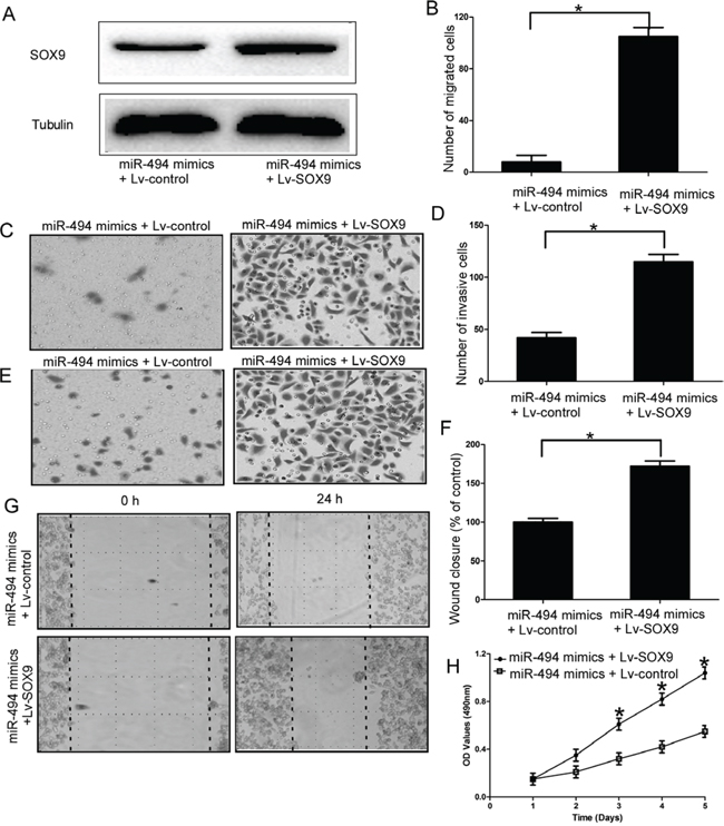 SOX9 is an important functional mediator of miR-494 in chondrosarcoma cells.