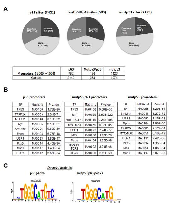 ChIP-Seq analysis of p63 and mutant p53 binding in HaCaT keratinocytes.
