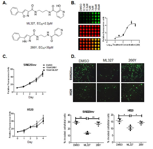 Treatment with ML327 reduces cancer cell invasive potential but has no effect on cell viability.