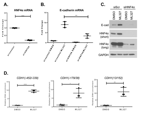 HNF4α is associated with ML327 activity.