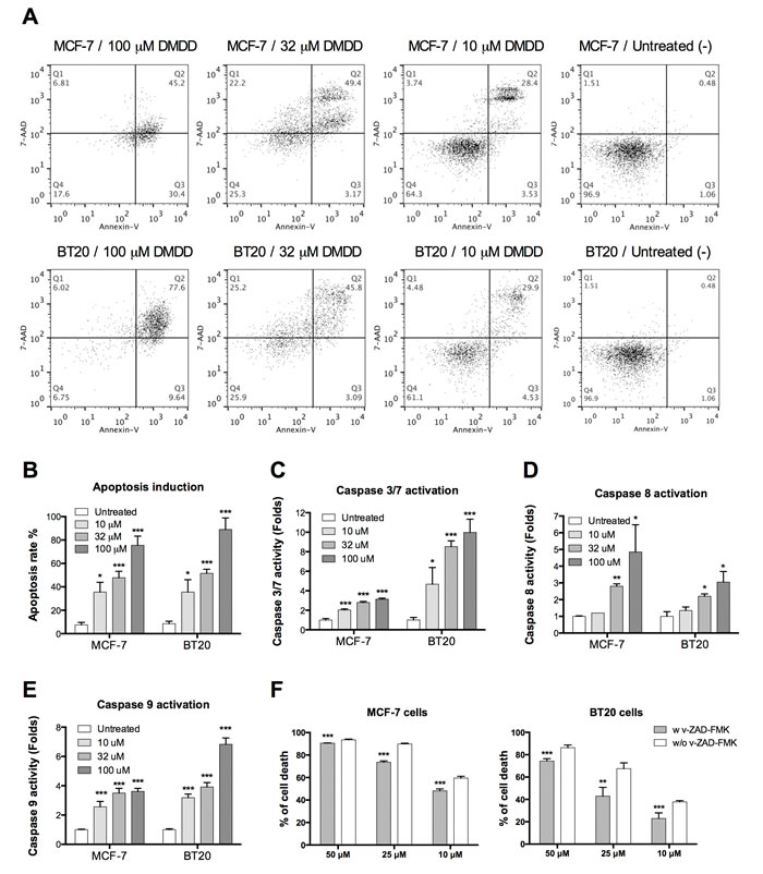 Evaluation of caspase-dependent apoptosis in human breast carcinoma cells MCF-7 and BT20.