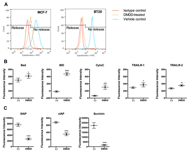 Analysis of cytochrome c release and apoptotic protein expression in DMDD-treated BT20 cells.