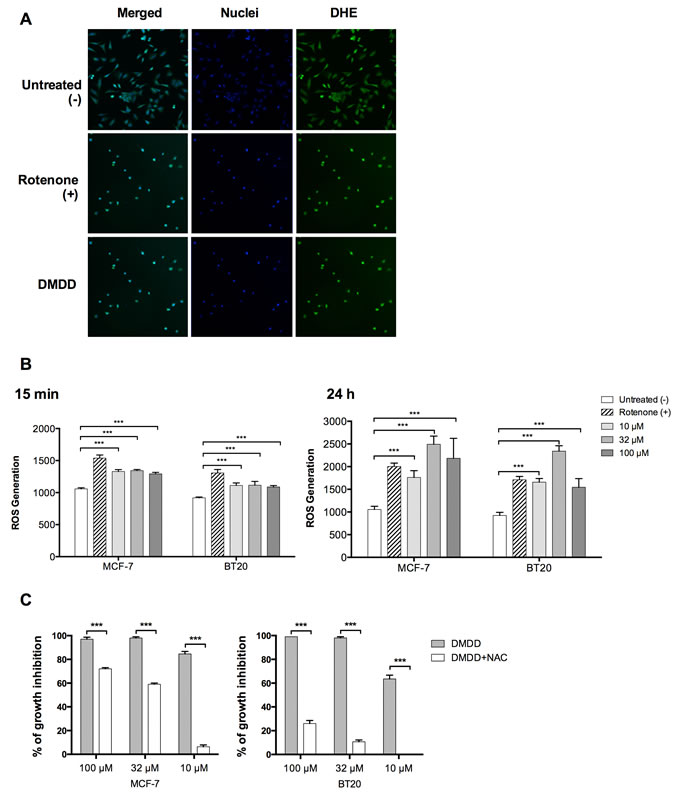 Oxidative stress induction in human breast carcinoma cells MCF-7 and BT20.