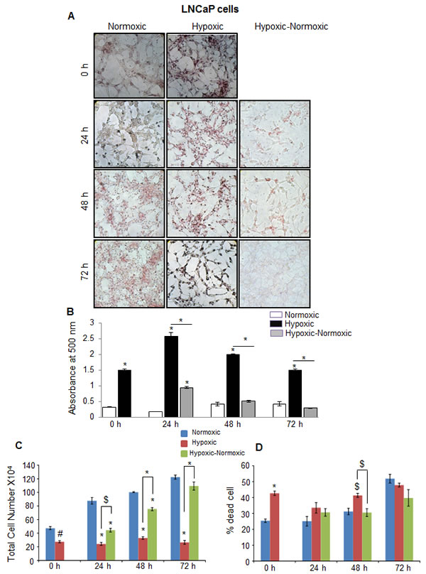 Hypoxia induces lipid accumulation and promotes proliferation following reoxygenation in prostate cancer LNCaP cells.