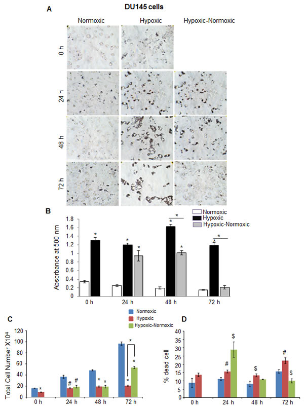 Hypoxia induces lipid accumulation and promotes proliferation following reoxygenation in prostate cancer DU145 cells.
