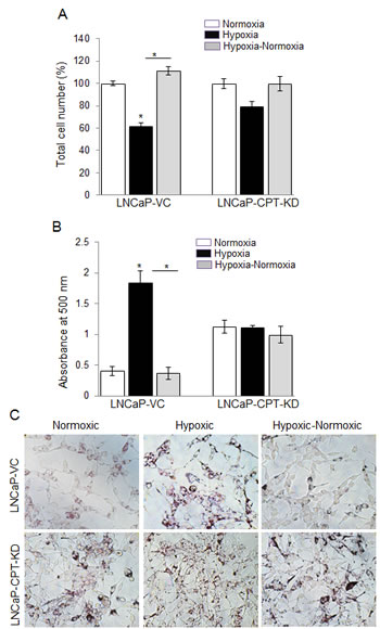 CPT1 knock-down compromised cell growth due to lack of lipid use following reoxygenation in hypoxic LNCaP cells.