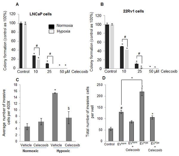 Increased sensitivity of hypoxia-exposed PCA cells towards celecoxib following reoxygenation.