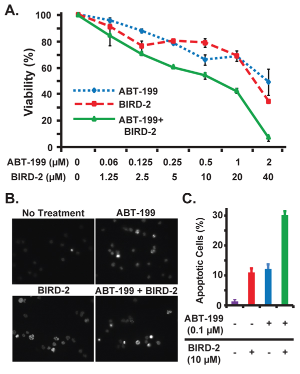 Combined activity of BIRD-2 and ABT-199 in follicular lymphoma cells.