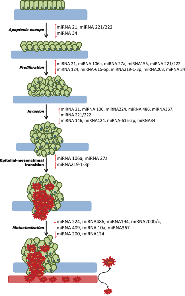 Role of miRNAs in PDAC carcinogenesis.