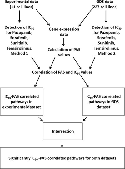 Outline of the procedures used to identify drug sensitivity-linked pathways.