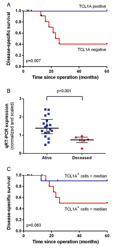 Correlation between TCL1A expression and survival.