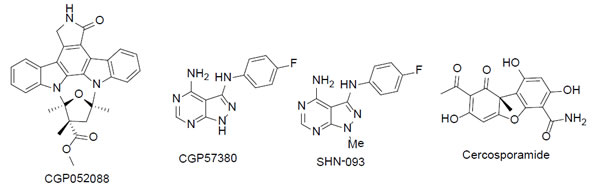 The chemical structures of MNK inhibitors and derivative.