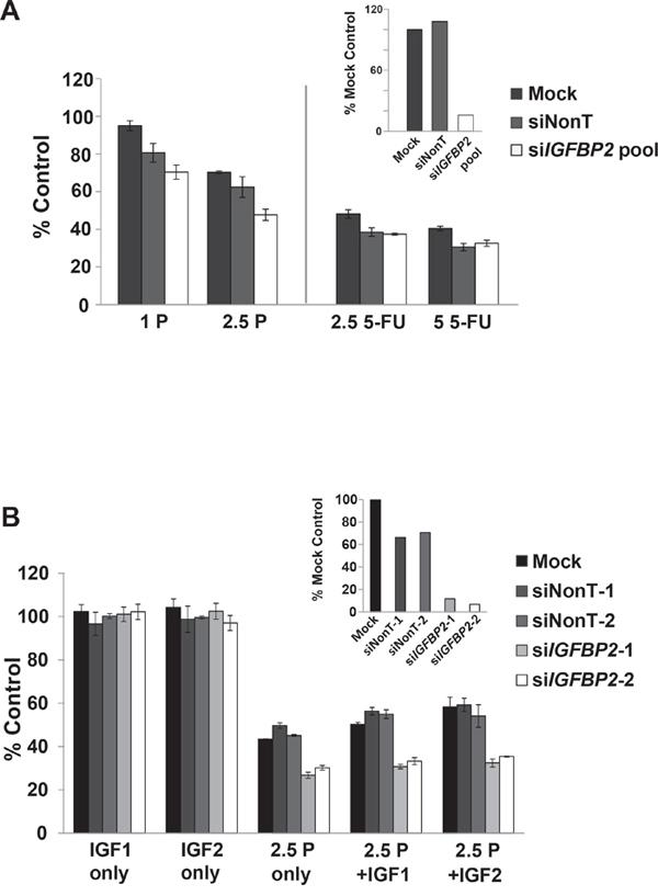 Effect of IGFBP2 modulation on chemosensitivity.