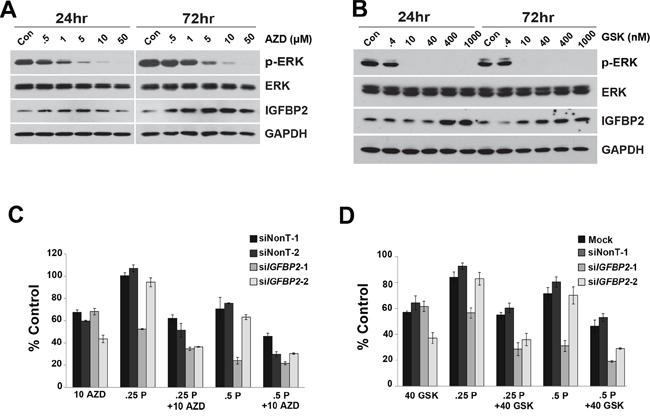 Effect of MEK1/2 Inhibitors on siIGFBP2-mediated chemosensitization.