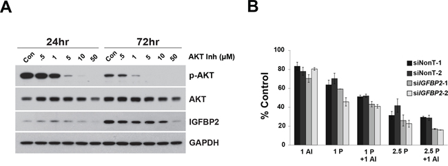 Effect of AKT Inhibitor VIII on si-IGFBP2-mediated chemosensitization.