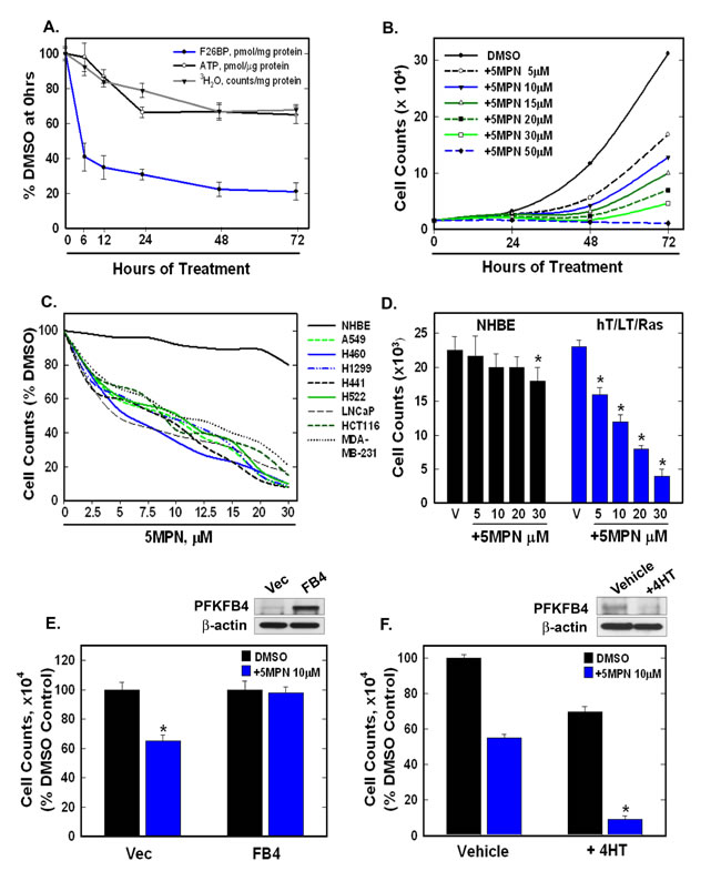 5MPN causes decreased proliferation of cancer cells preceded by a reduction in intracellular F2,6BP concentration, glycolysis and ATP.