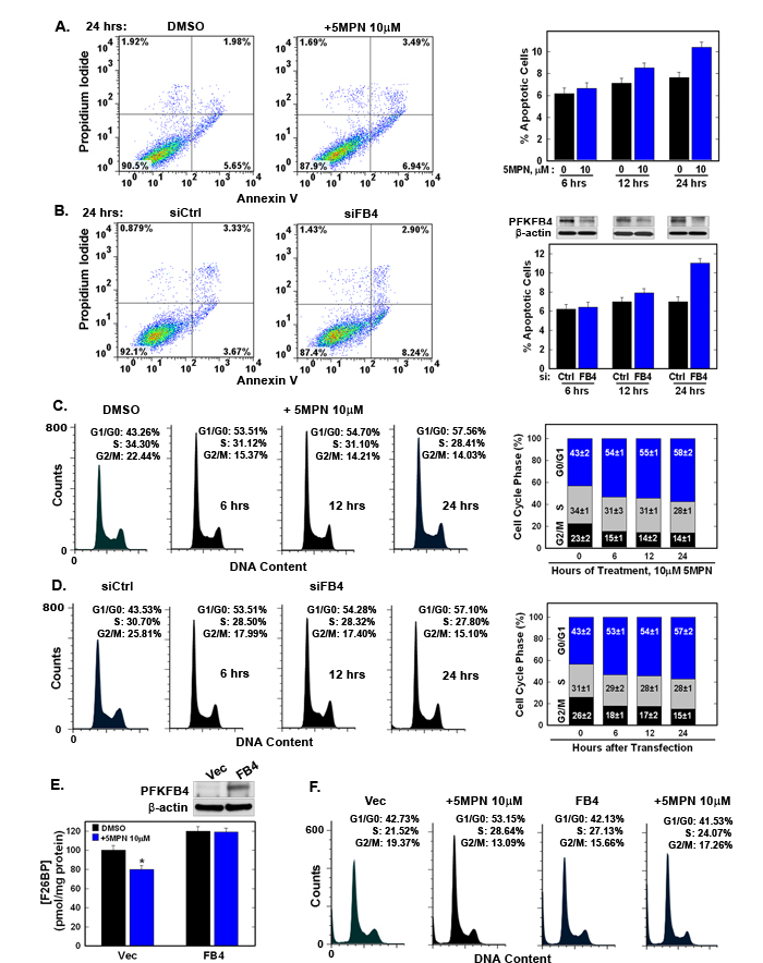 5MPN induces cell cycle arrest at the G1 phase.