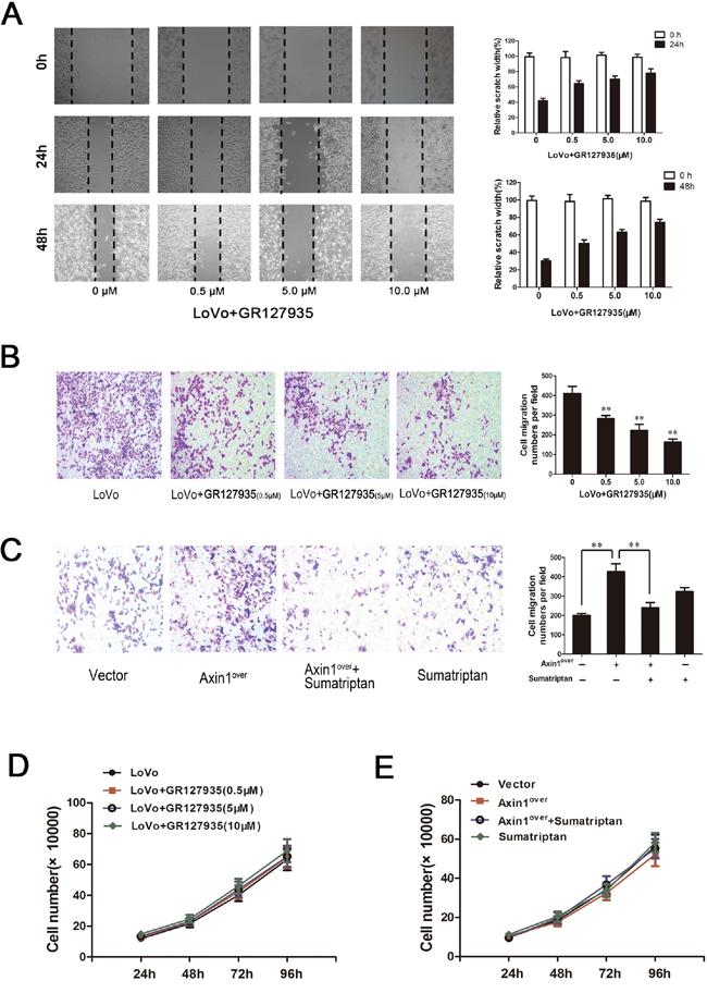 Oncotarget | 5-hydroxytryptamine receptor (5-HT 1D R) promotes