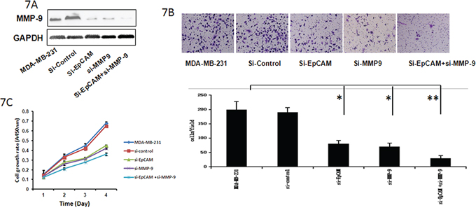 Si-EpCAM inhibited breast cancer cell growth and invasion through regulation of MMP-9.