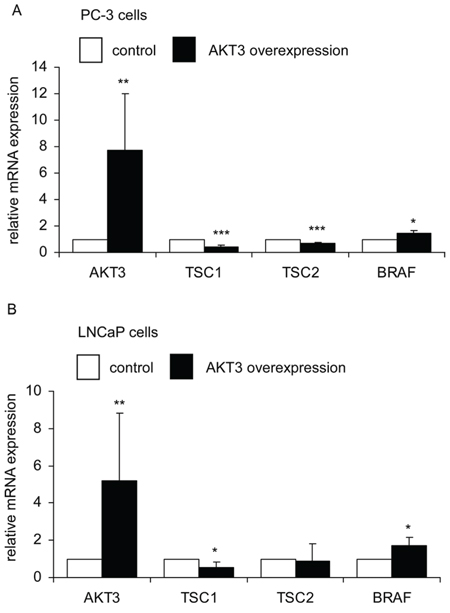 AKT3 gene overexpression affected expression of TSC1, TSC2, and BRAF genes in PC-3 and LNCaP PCa cells.