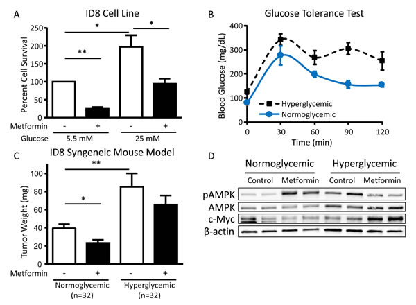 Hyperglycemia inhibits the cytotoxic effect of metformin