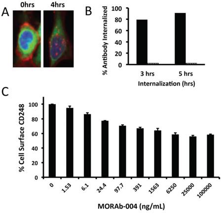 Internalization of MORAb-004 and CD248 on human pericytes.
