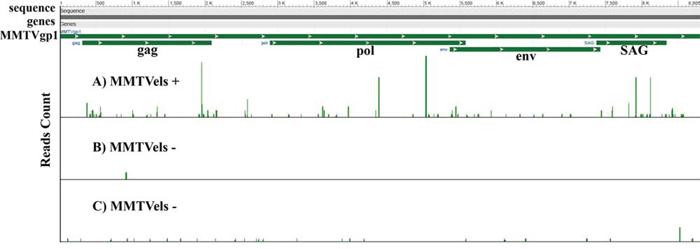 Whole transcriptome analysis of human saliva.