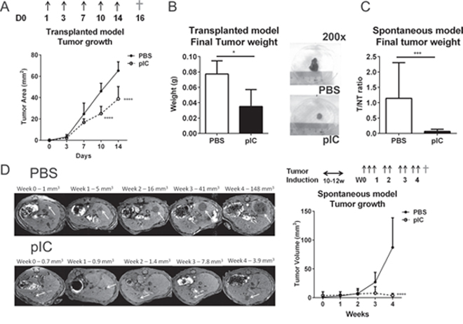 Poly-ICLC restricts tumor growth in murine models of liver tumors.