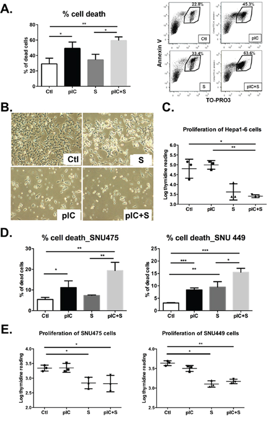 Co-treatment with poly-ICLC and Sorafenib impairs tumor cell survival and proliferation.