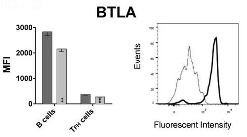 BTLA and HVEM expression on B cells and TFH  cells.
