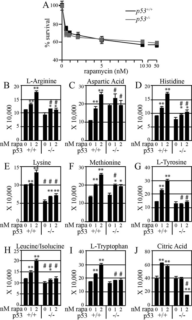 Rapamycin more effectively increases amino acid levels in mouse ES cells with functional p53.