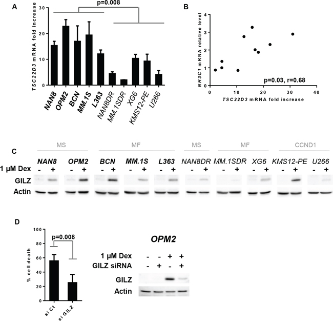 GILZ up-regulation is necessary for Dex-induced apoptosis.