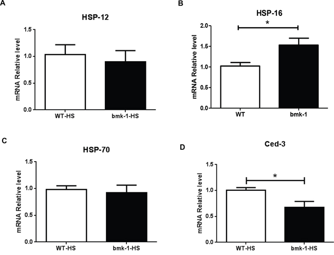 Hsp-16 expression was elevated after heat shock in bmk-1 over-expressing C. elegans.