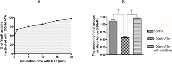 The elimination of ATA inhibitory properties by catalase.