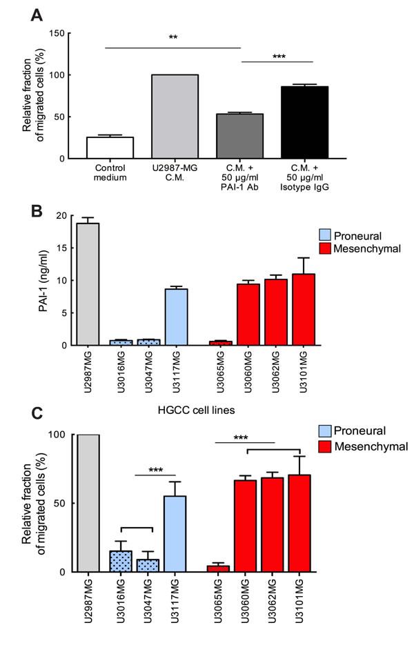 Neutralization of glioma-derived PAI-1 attenuates the migration of MCs toward conditioned medium.